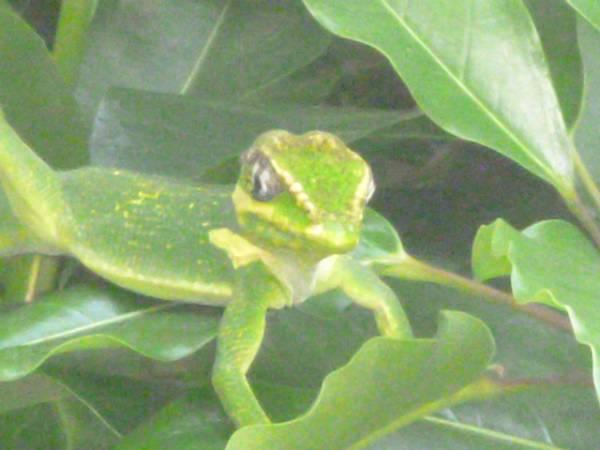 tonytocups - photo 8